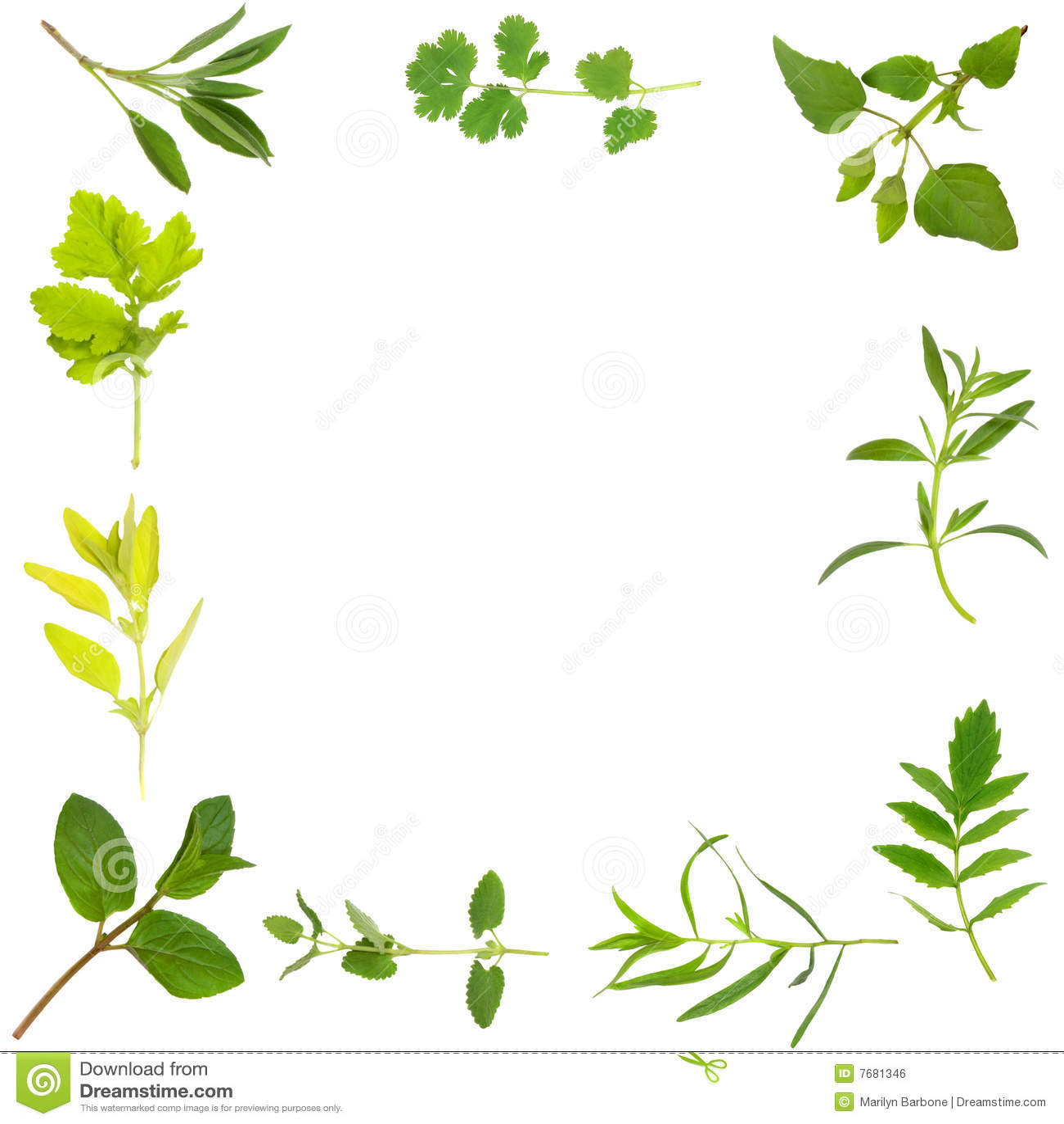 Beira da folha da erva