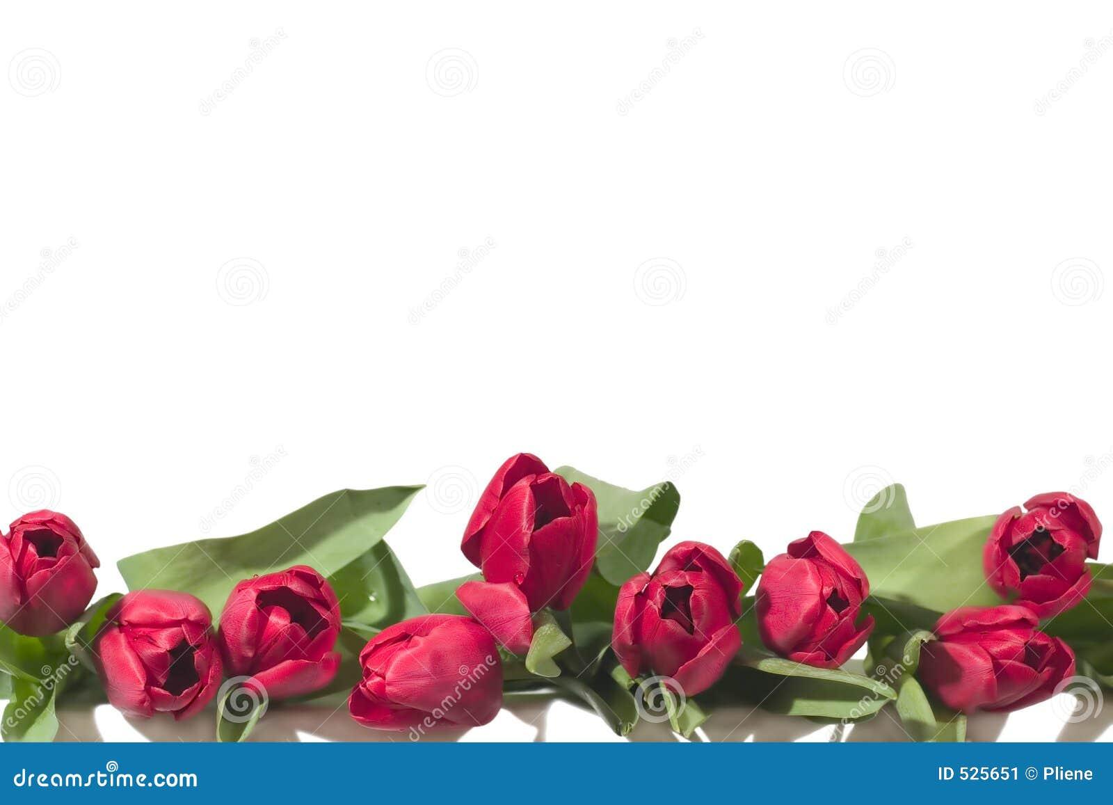 Beira dos Tulips