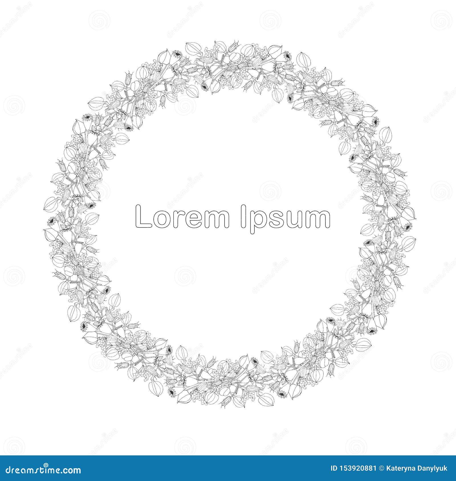 Beira redonda de frutos do lila do aquilegia do Papaver, estoque tirado do elemento do projeto do lorem ipsum mão gráfica monocro