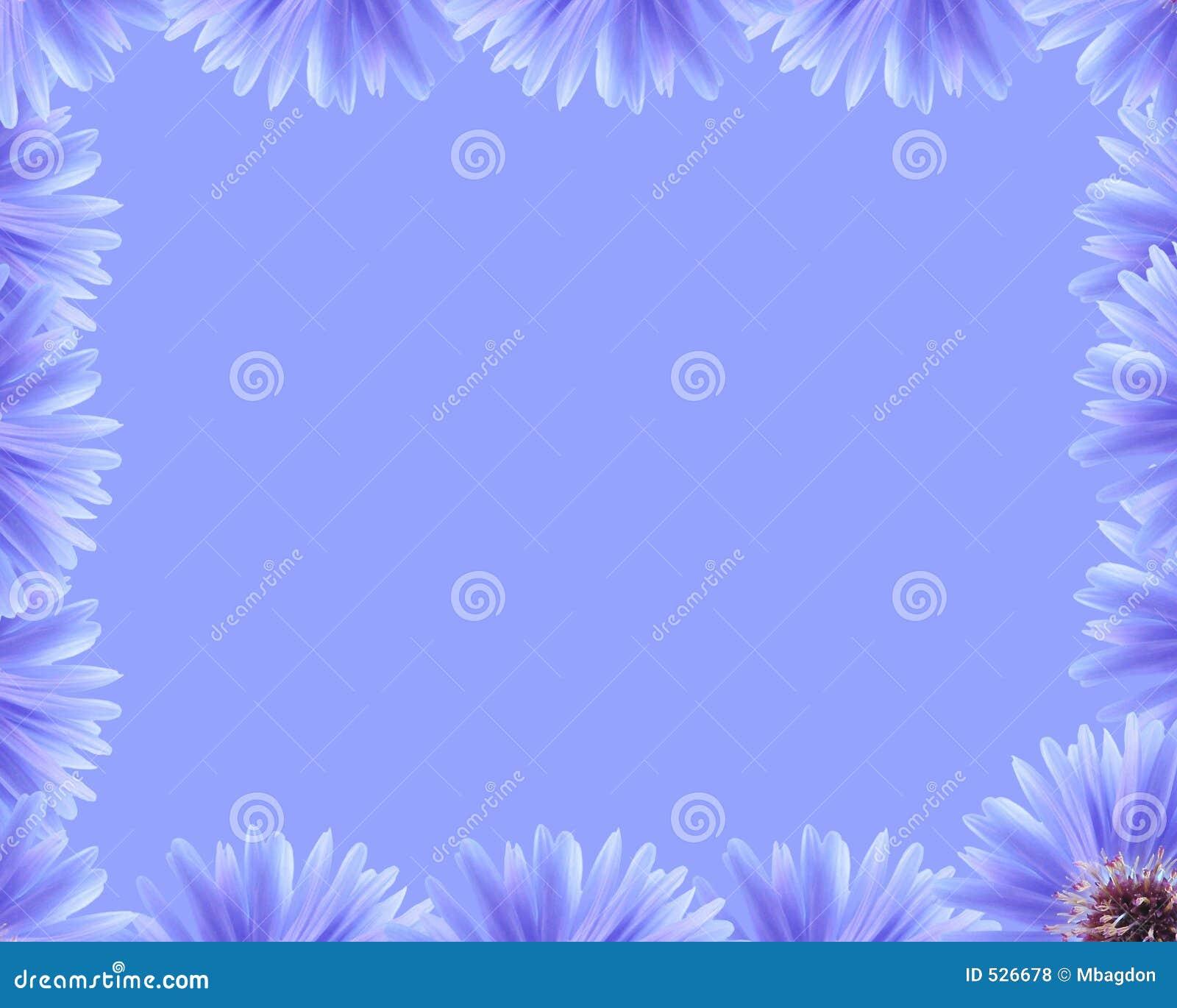 Beira roxa da flor