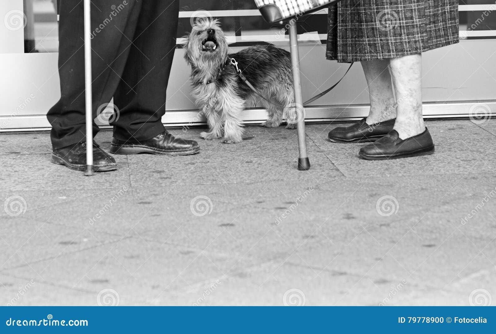 Bejaarden met een hond