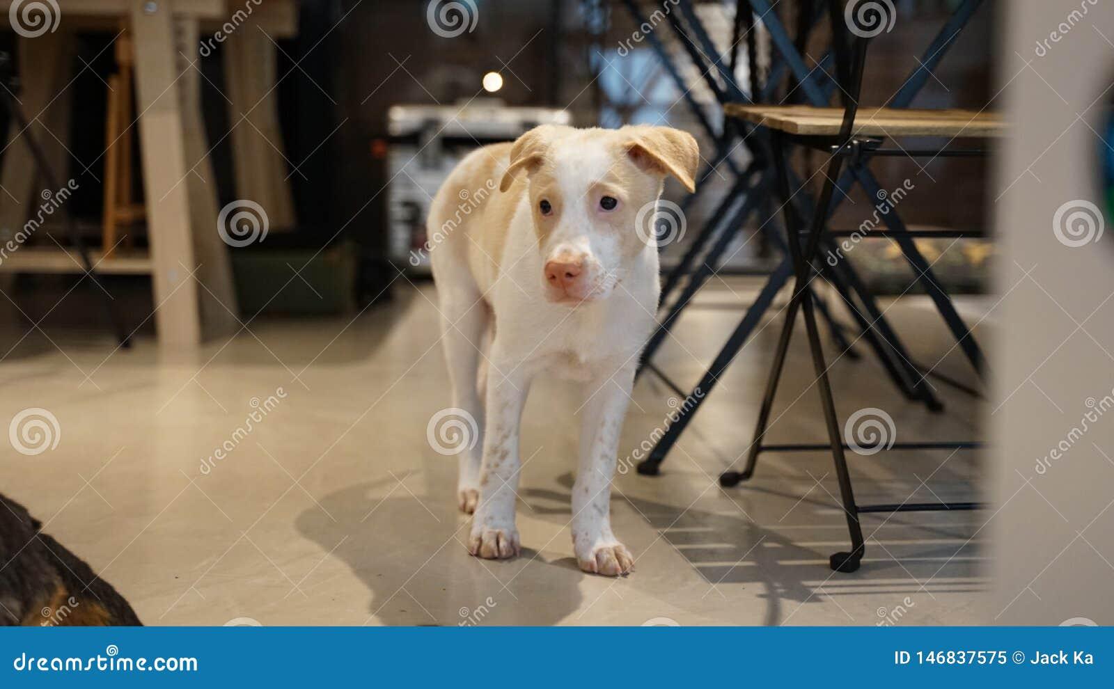 Bekijken het van een hond de overkant