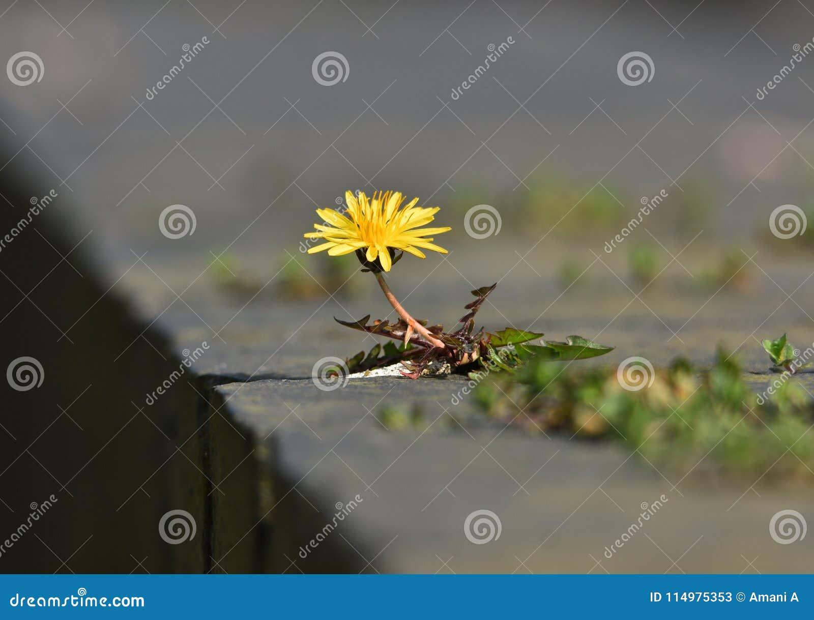 Belästigungsunkraut oder schöne wilde Blume?