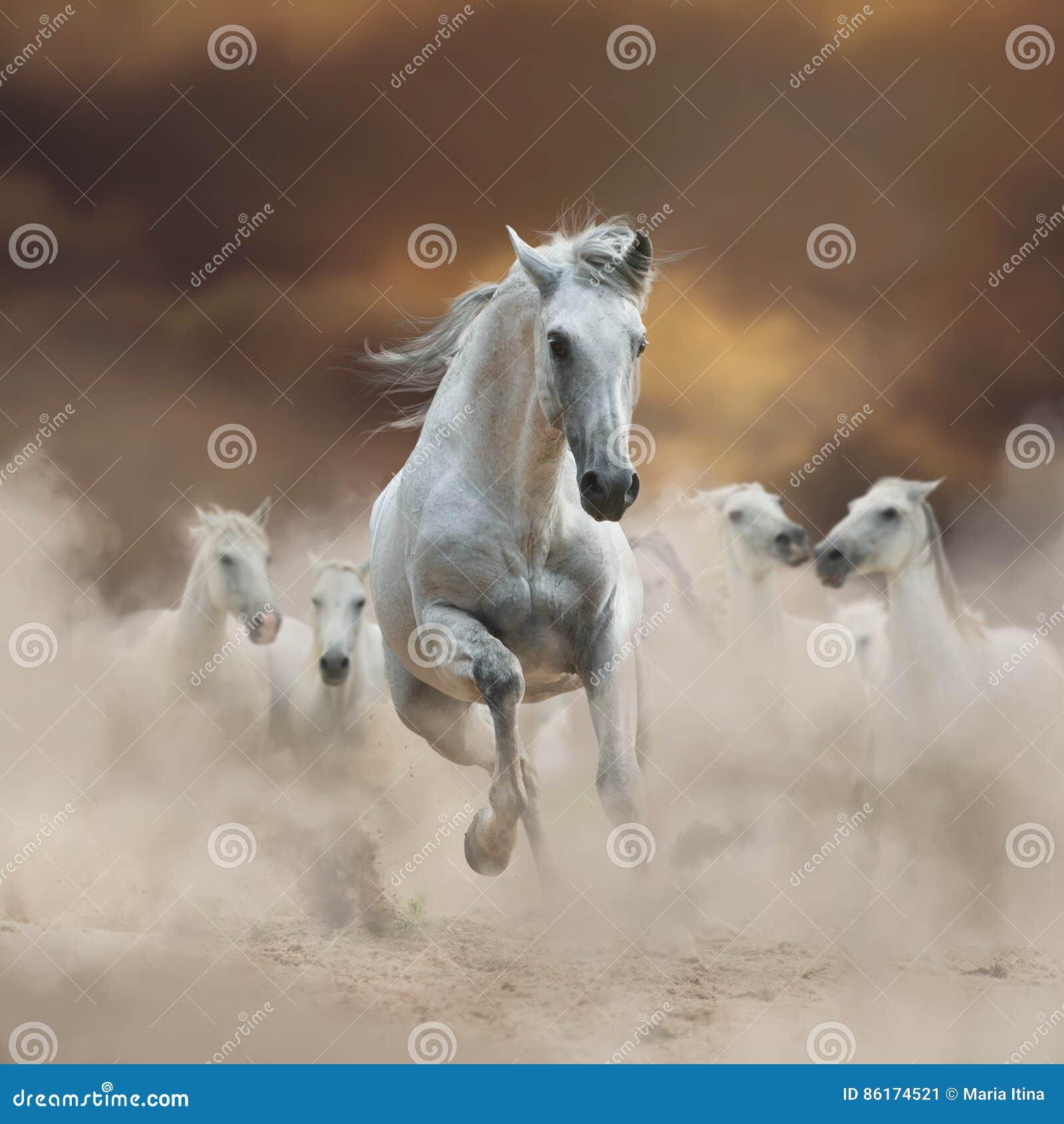 Bel étalon andalou blanc avec le troupeau sur la liberté