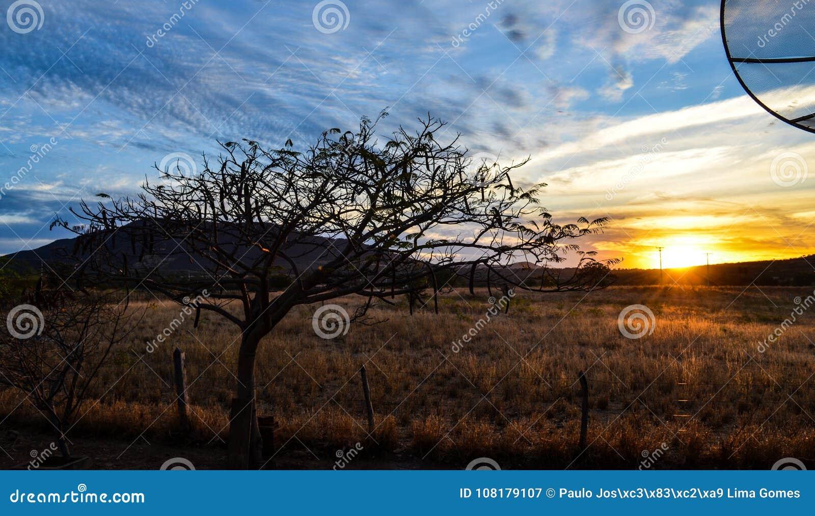 Bel arbre spécial avec les branches sèches dans le coucher du soleil avec des barrières de ferme
