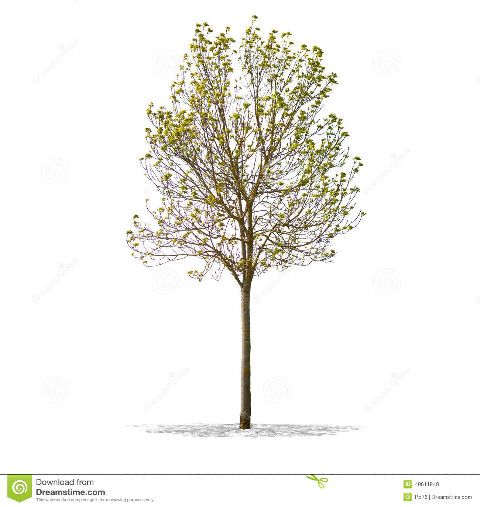 bel arbre vert sur un fond blanc dans la d finition lev e photo stock image 40611848. Black Bedroom Furniture Sets. Home Design Ideas