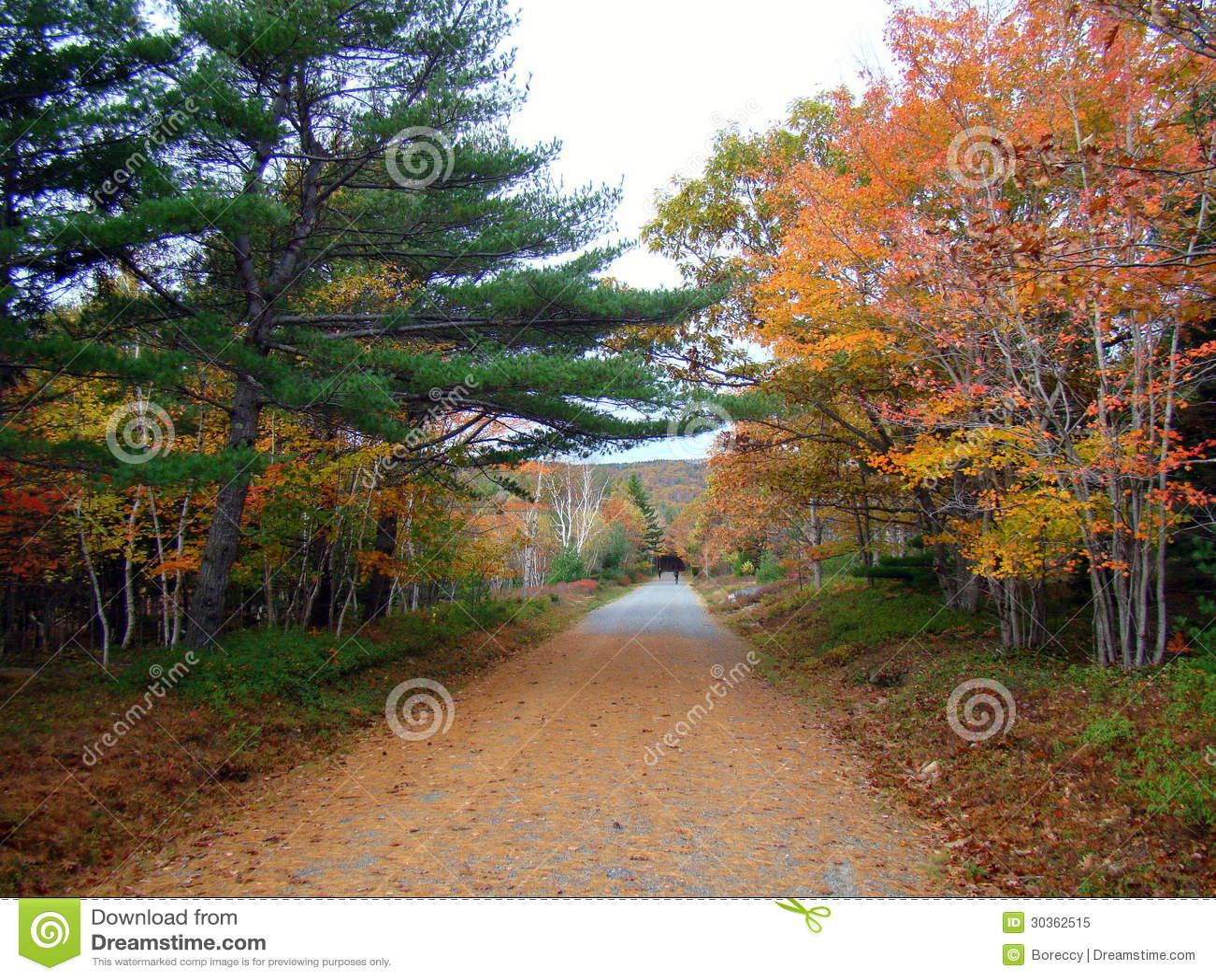 Bel automne en parc national d Acadia, Maine