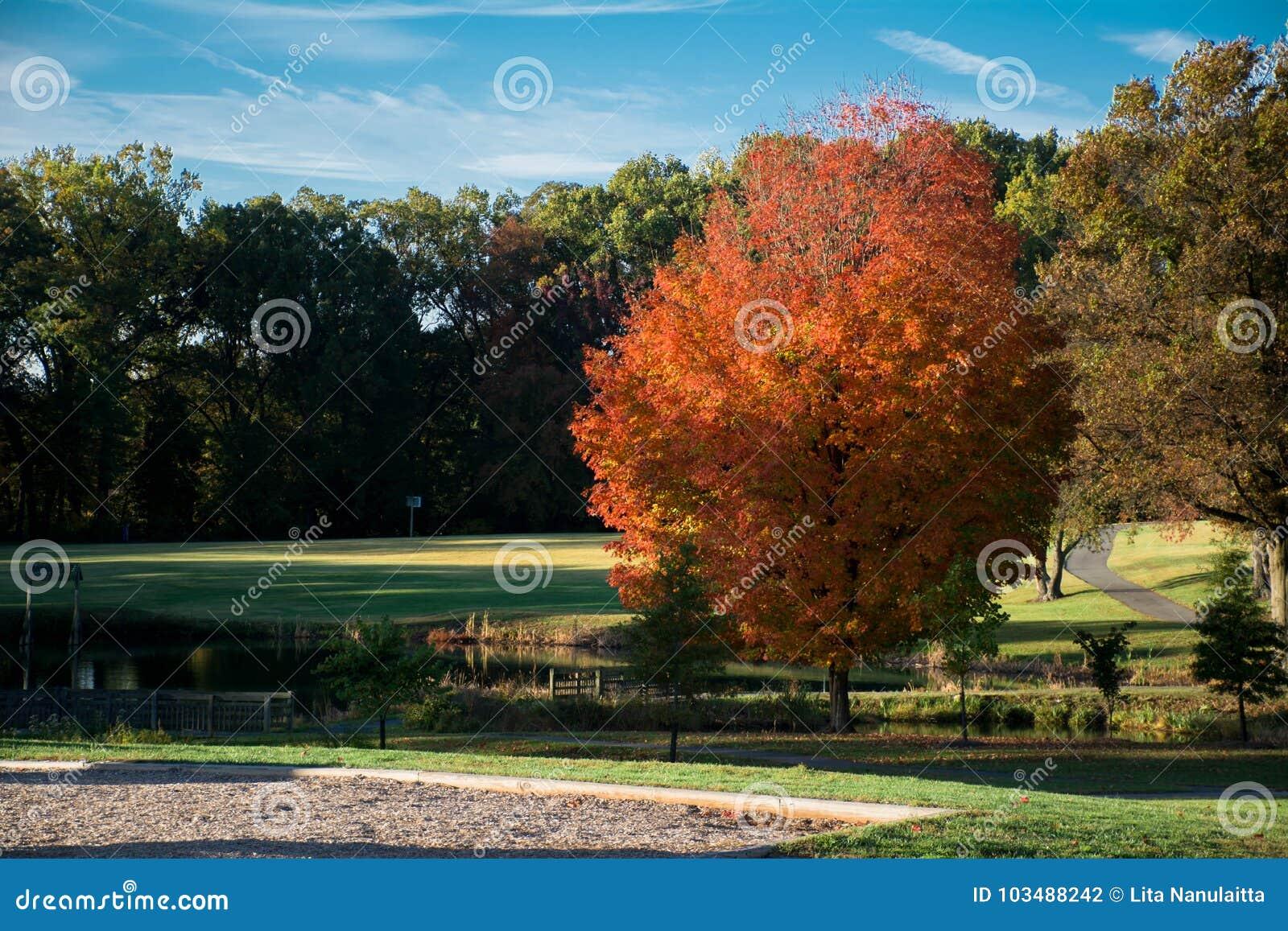 Bel Autumn Seasons, ciel bleu, froid et brise dehors