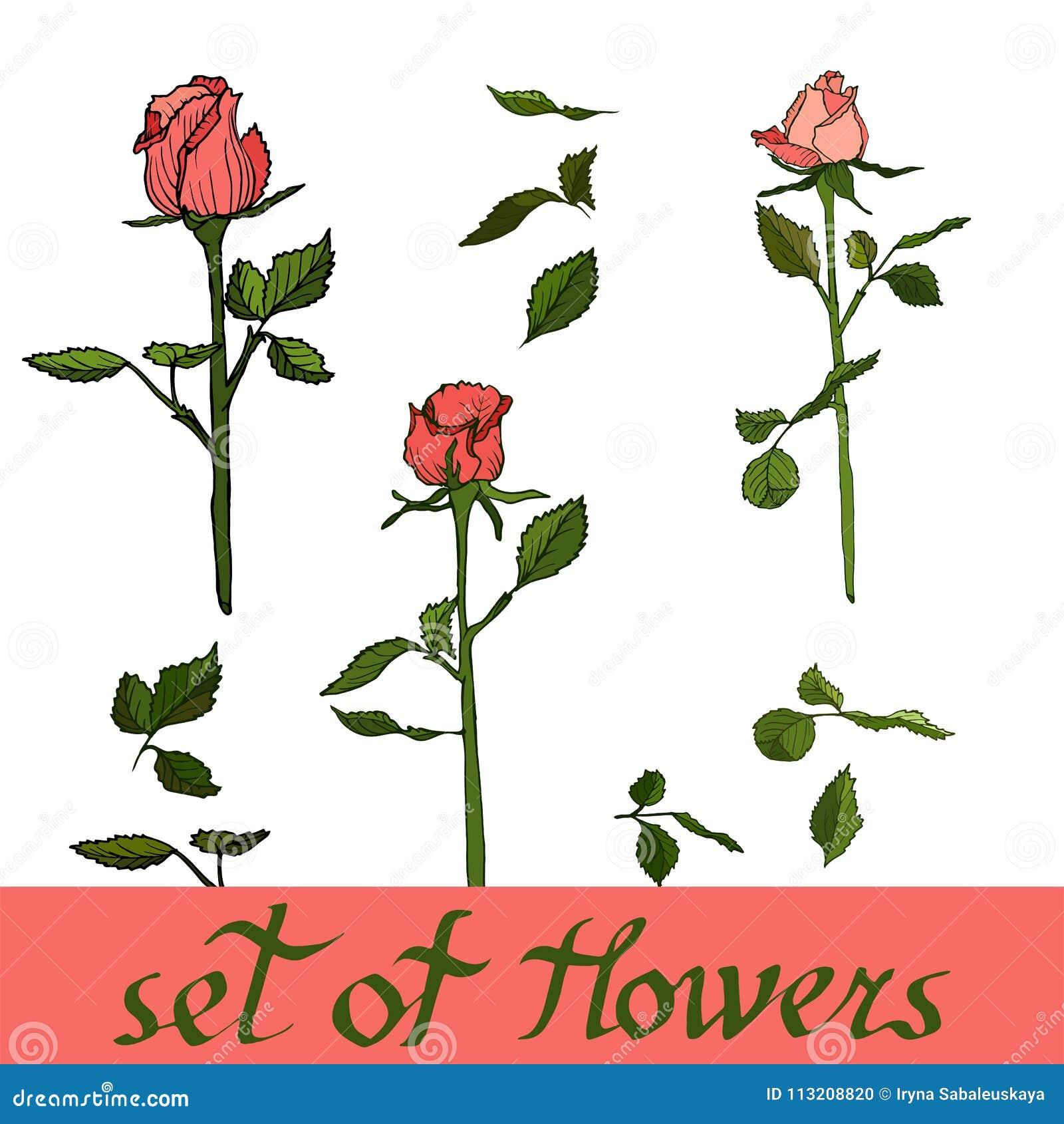 Bel ensemble de fleurs, vecteur des roses Illustration florale de vecteur