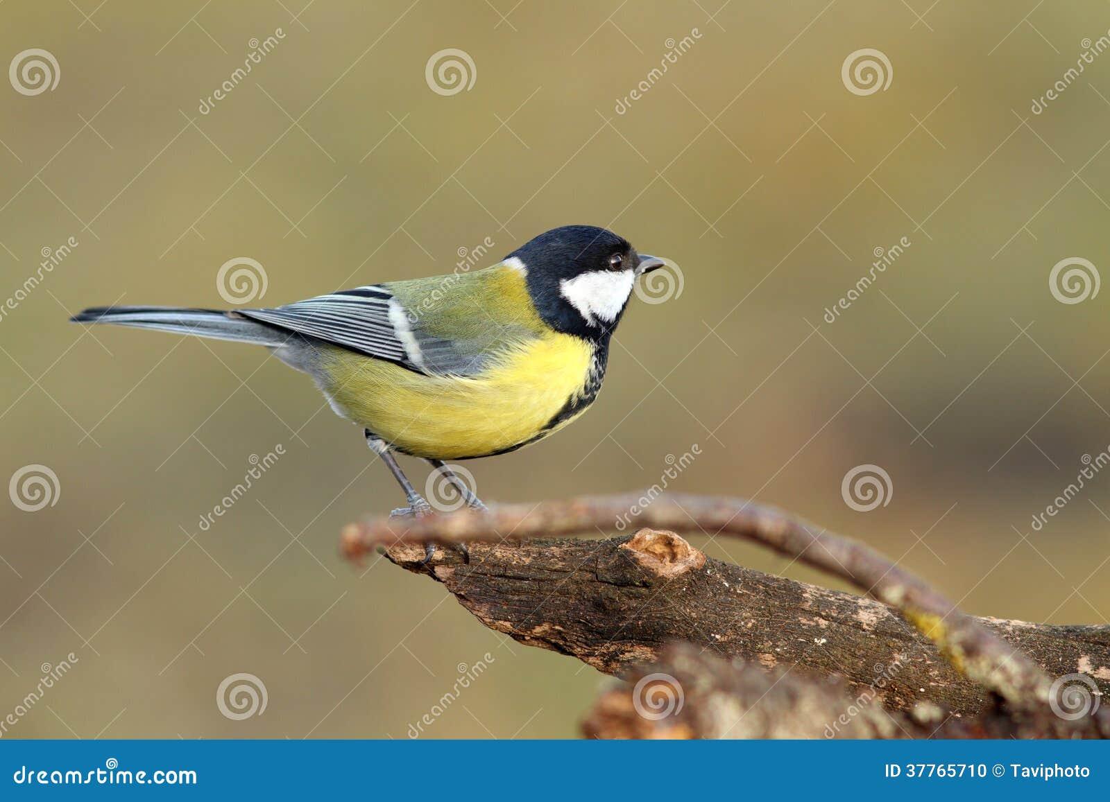 Bel oiseau minuscule dans le jardin photo stock image for Oiseau decoratif jardin
