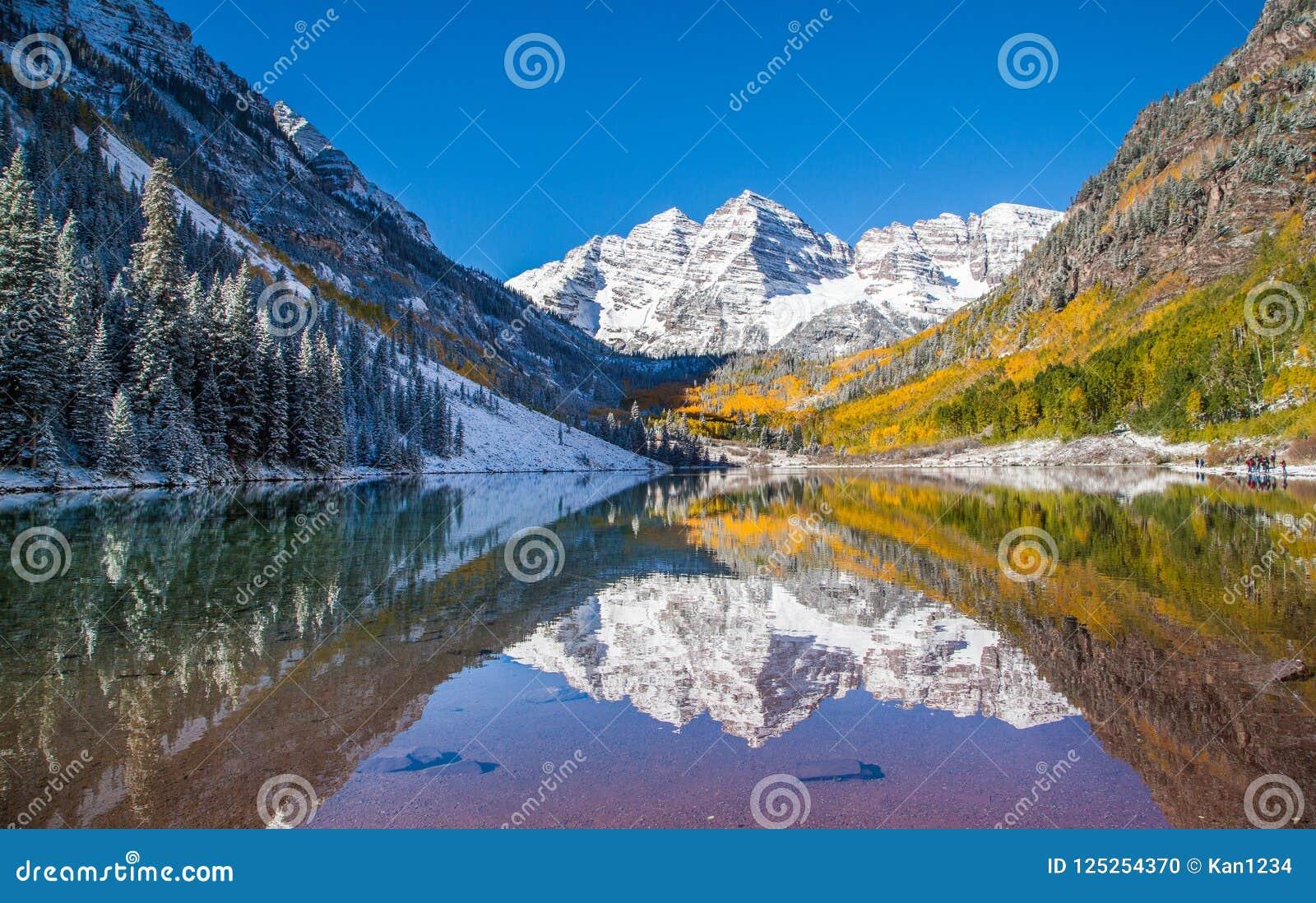 Belces marrón en follaje de otoño después de la tormenta de la nieve en Aspen, Colorado