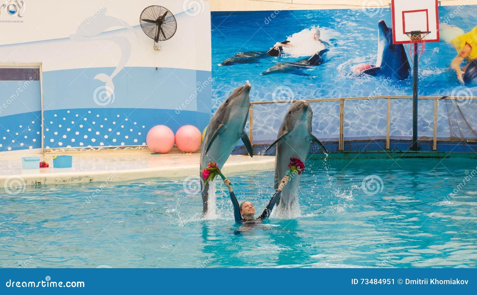 Дельфин игра 4