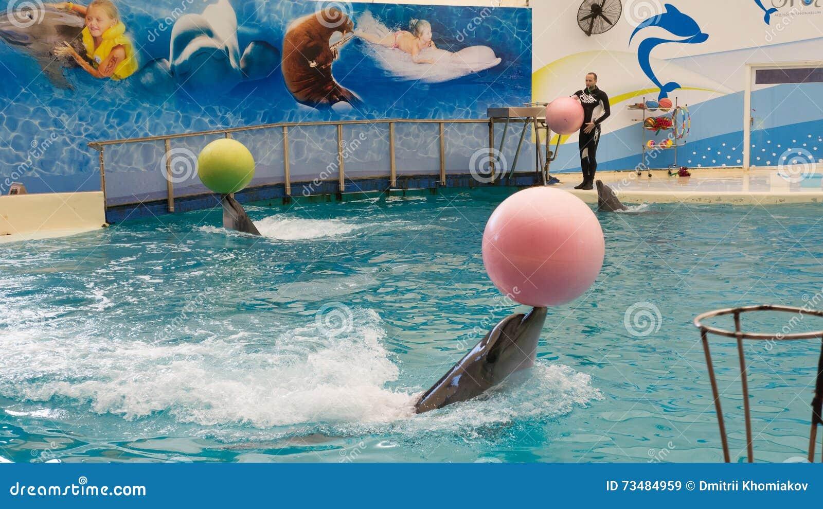 BELEK, TURKIJE - OKTOBER 04, 2014: De dolfijnen tonen, Troy Dolphinarium Twee bottlenosedolfijnen