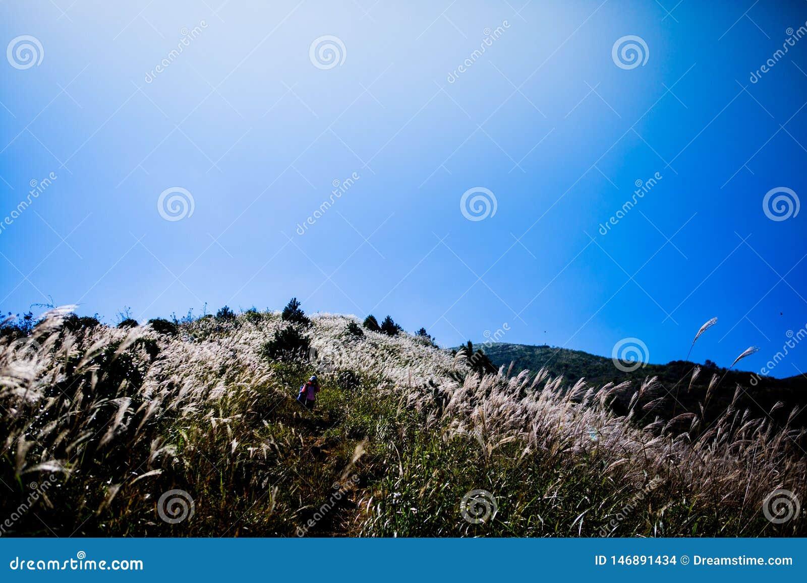 A beleza da natureza, grama, céu azul, sol