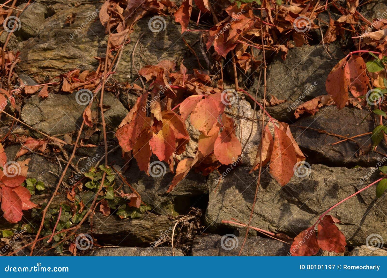 A beleza das folhas no outono