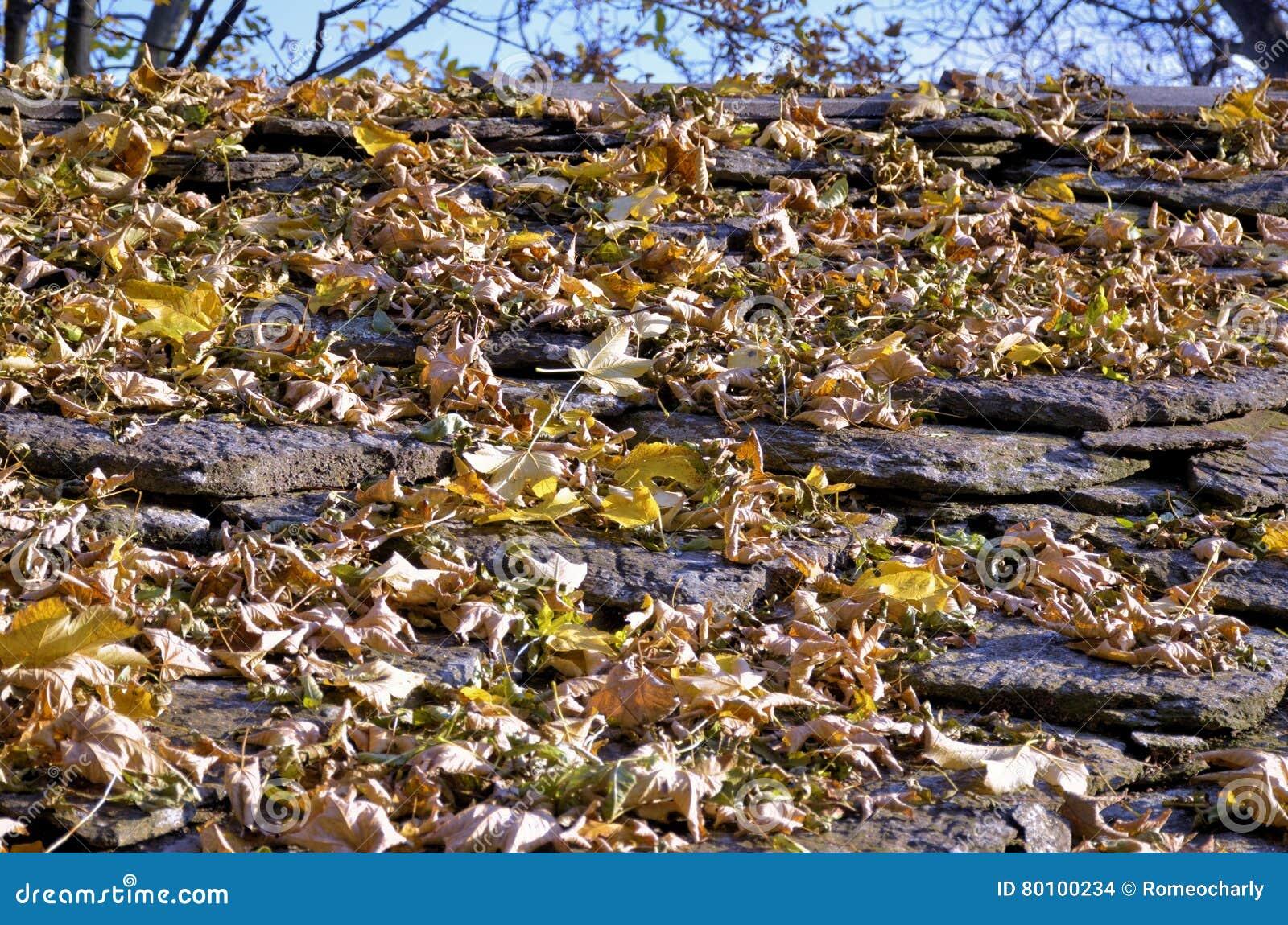 A beleza das folhas no outono acima da casa