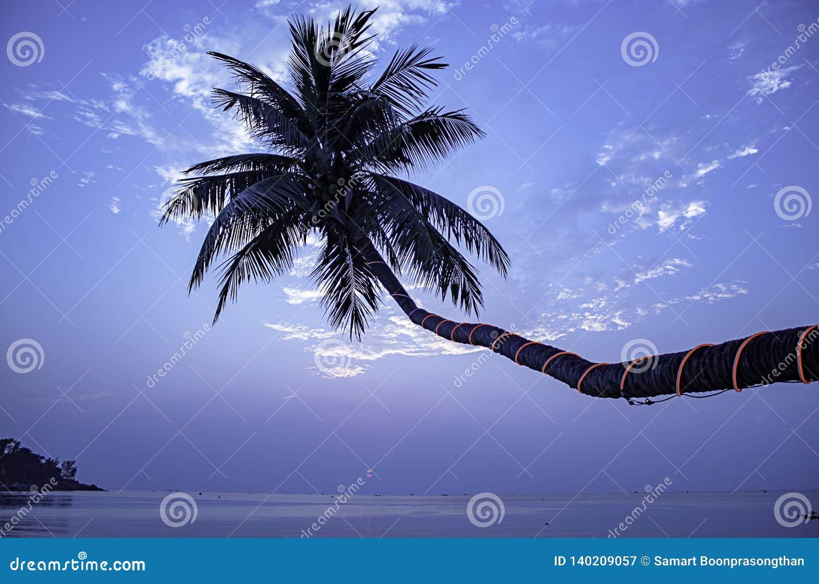 A beleza do mar do por do sol sob as palmas de coco na praia da salada de Haad, koh Phangan