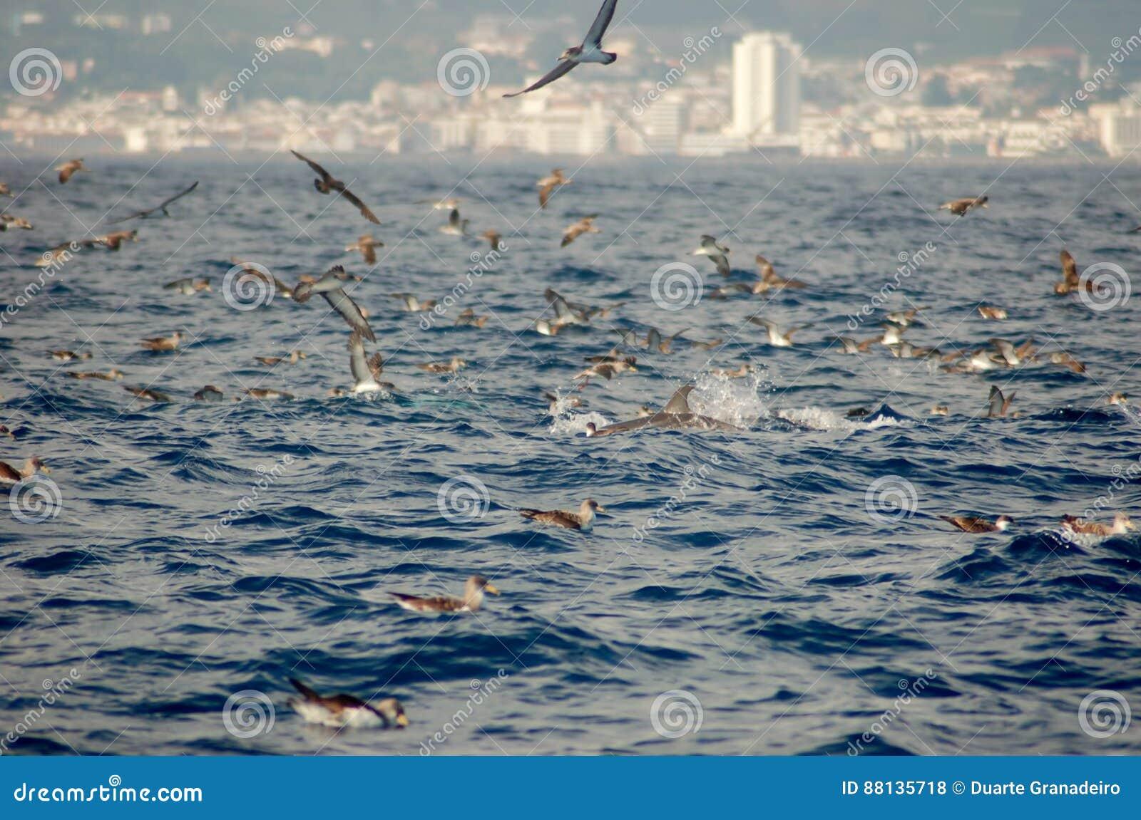 A beleza dos golfinhos da água salgada que jogam no Oceano Atlântico