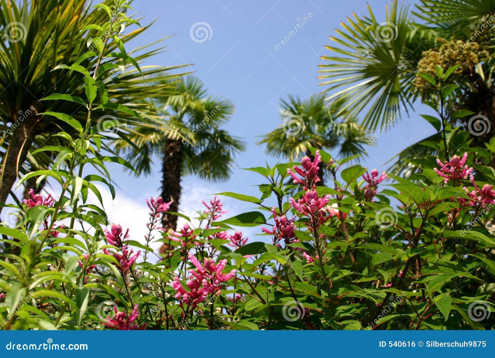 Beleza tropical