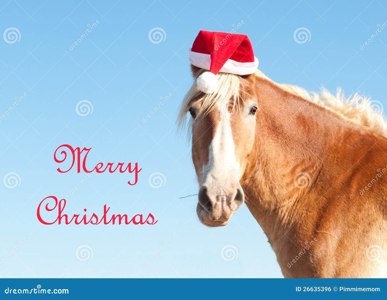 Belgian Draft Horse Wishing Merry Christmas Royalty Free Stock ...