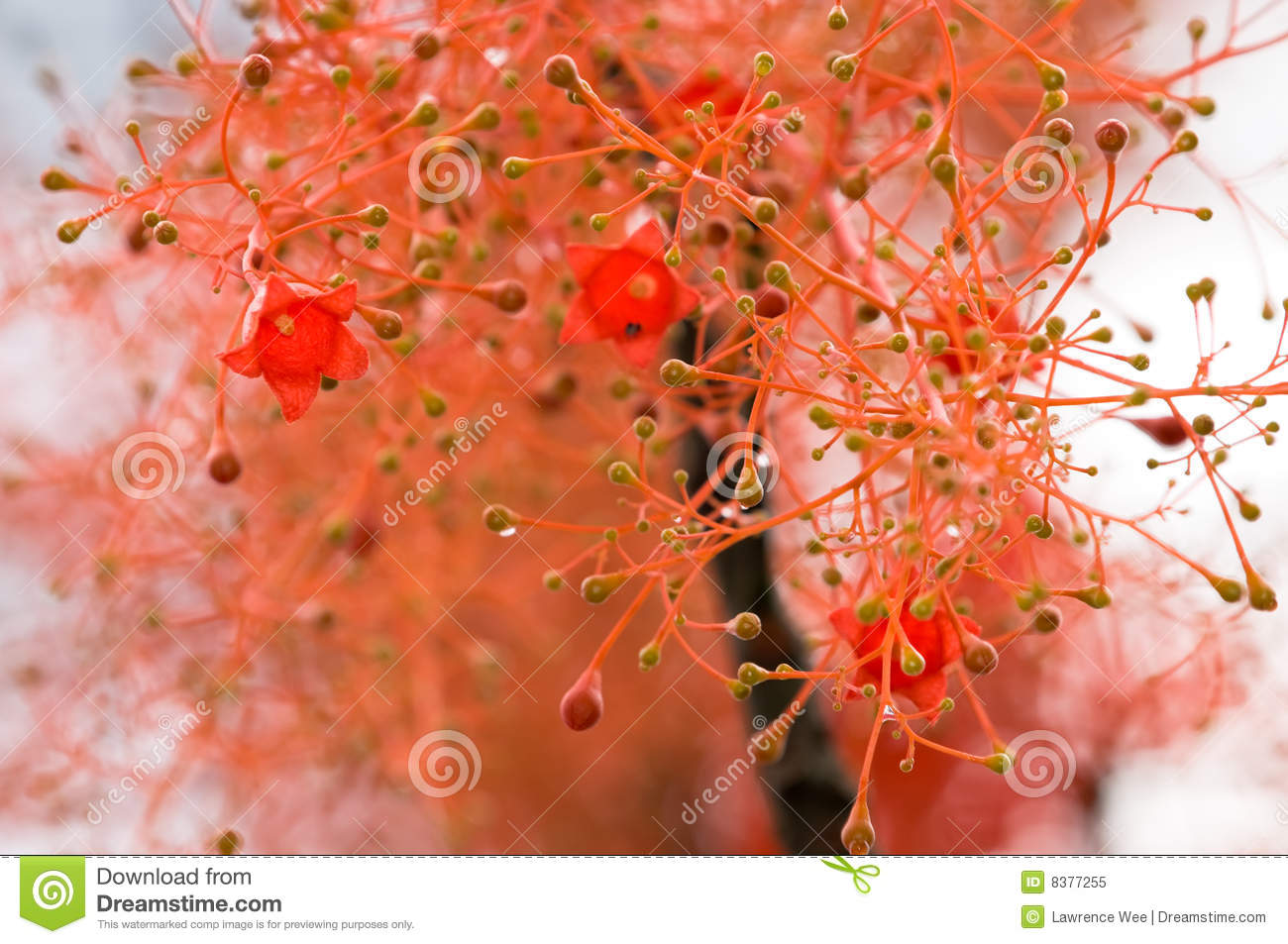 Download Bell Shaped Red Flowers stock image. Image of countless - 8377255