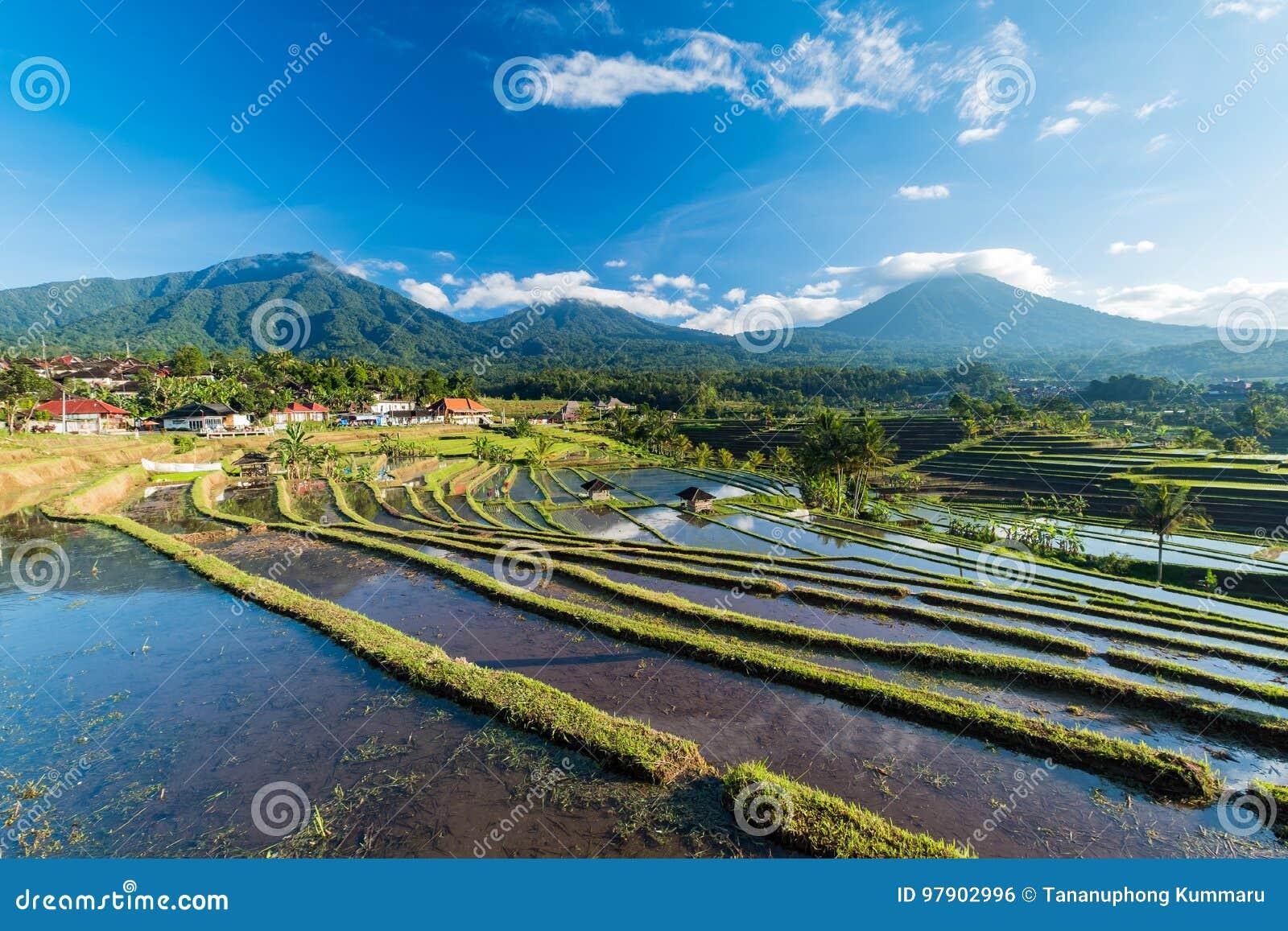 Bella alba sopra i terrazzi del riso di Jatiluwih