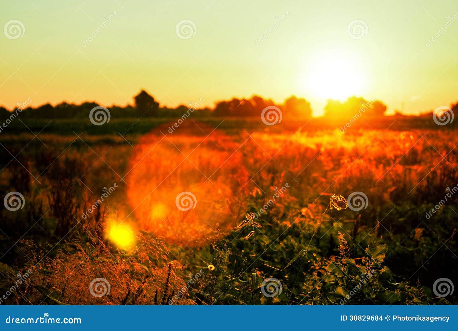 Bella alba sopra un campo verde