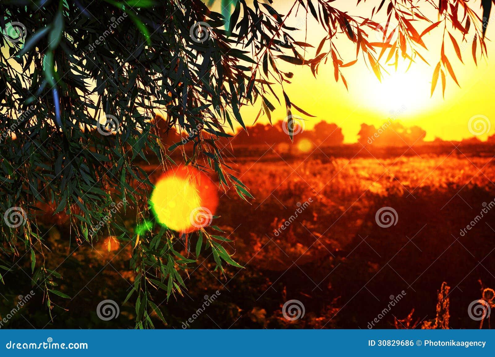 Bella alba sopra un campo visto da dietro un albero