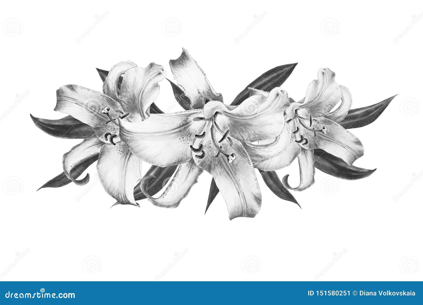 Bella composizione in bianco e nero nel giglio Mazzo dei fiori Stampa floreale Disegno dell indicatore
