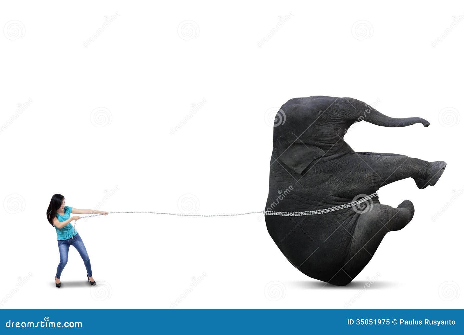Bella donna che tira grande elefante