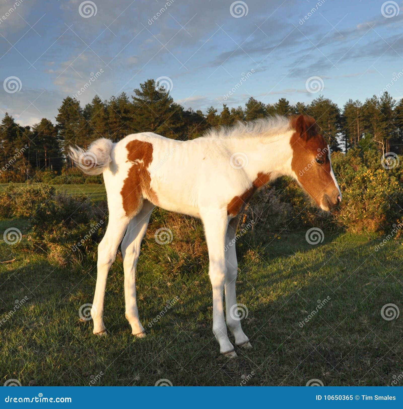Bella foresta del foal nuova