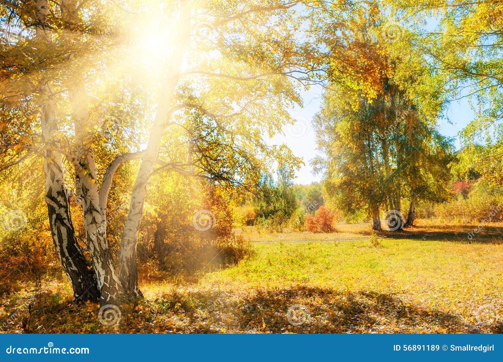 Bella foresta di autunno al giorno soleggiato