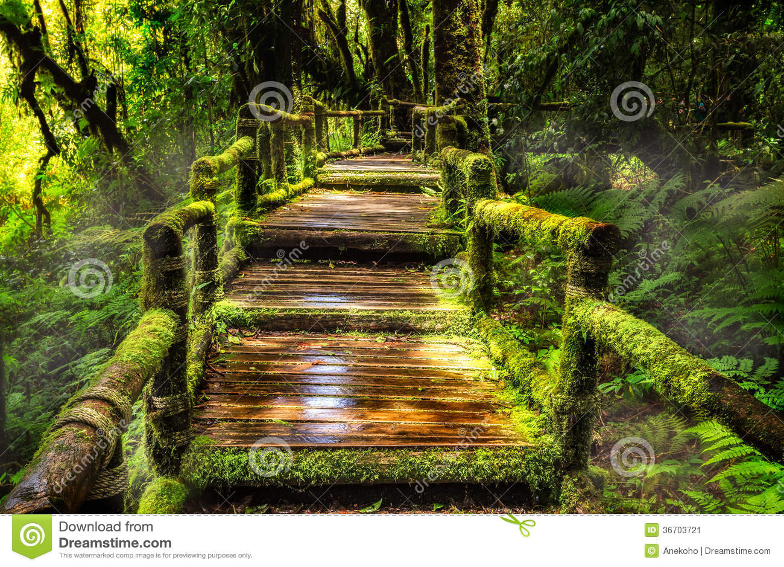 Bella foresta pluviale al sentiero didattico del Ka del ANG