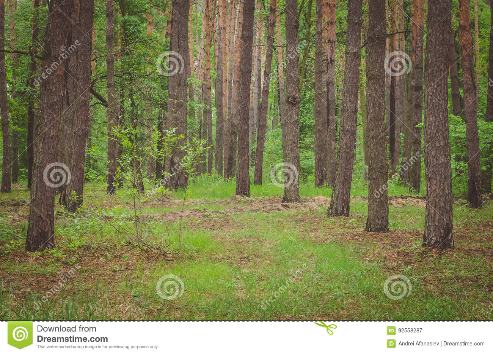 Bella foresta verde in primavera