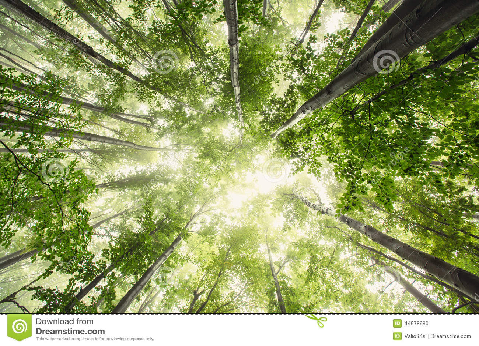 Bella natura alla mattina nella foresta nebbiosa della molla con il sole