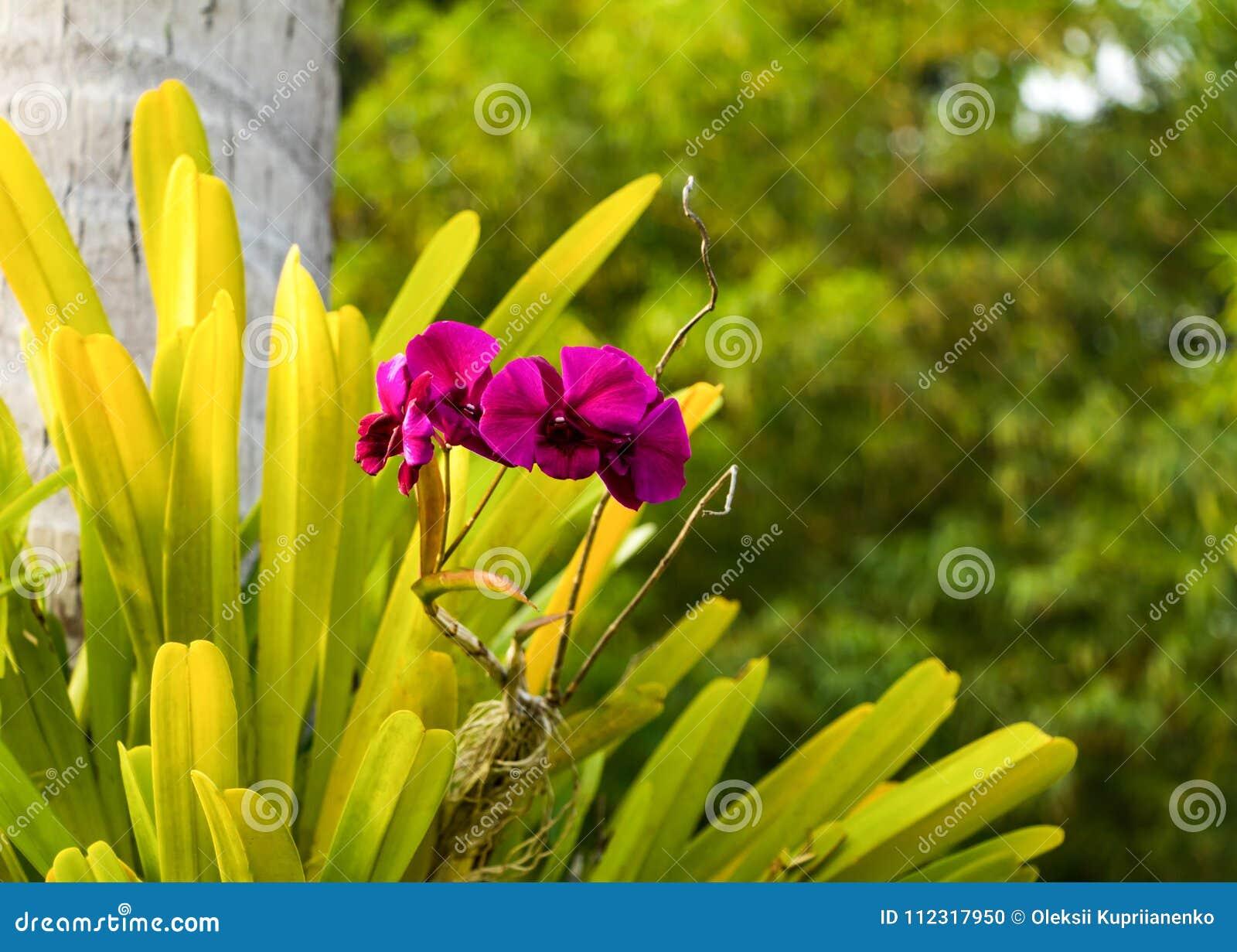 Carta Da Parati Foresta Tropicale : Bella orchidea selvatica che cresce sullalbero carta da parati