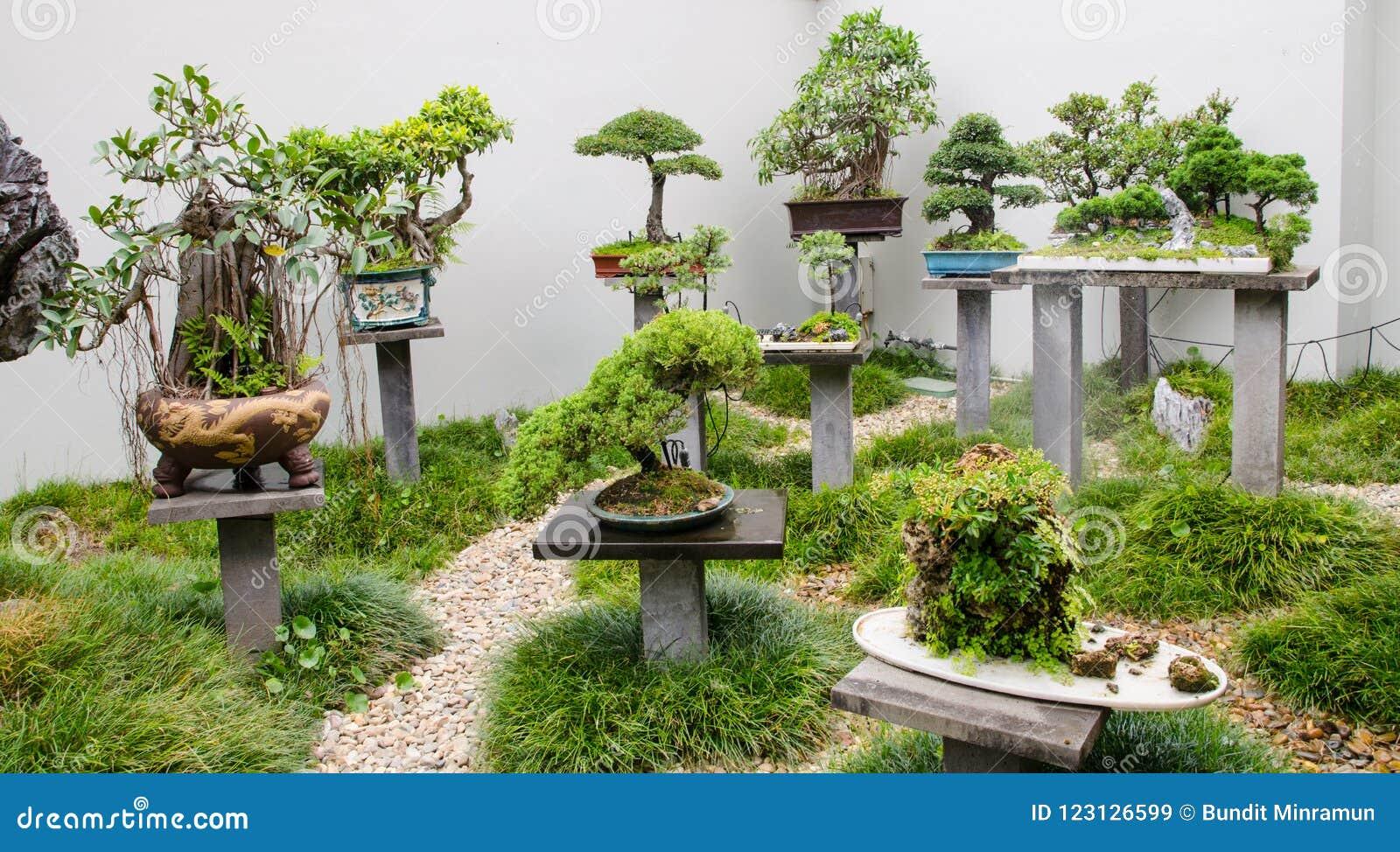 Bella raccolta degli alberi dei bonsai con i vasi in un giardino