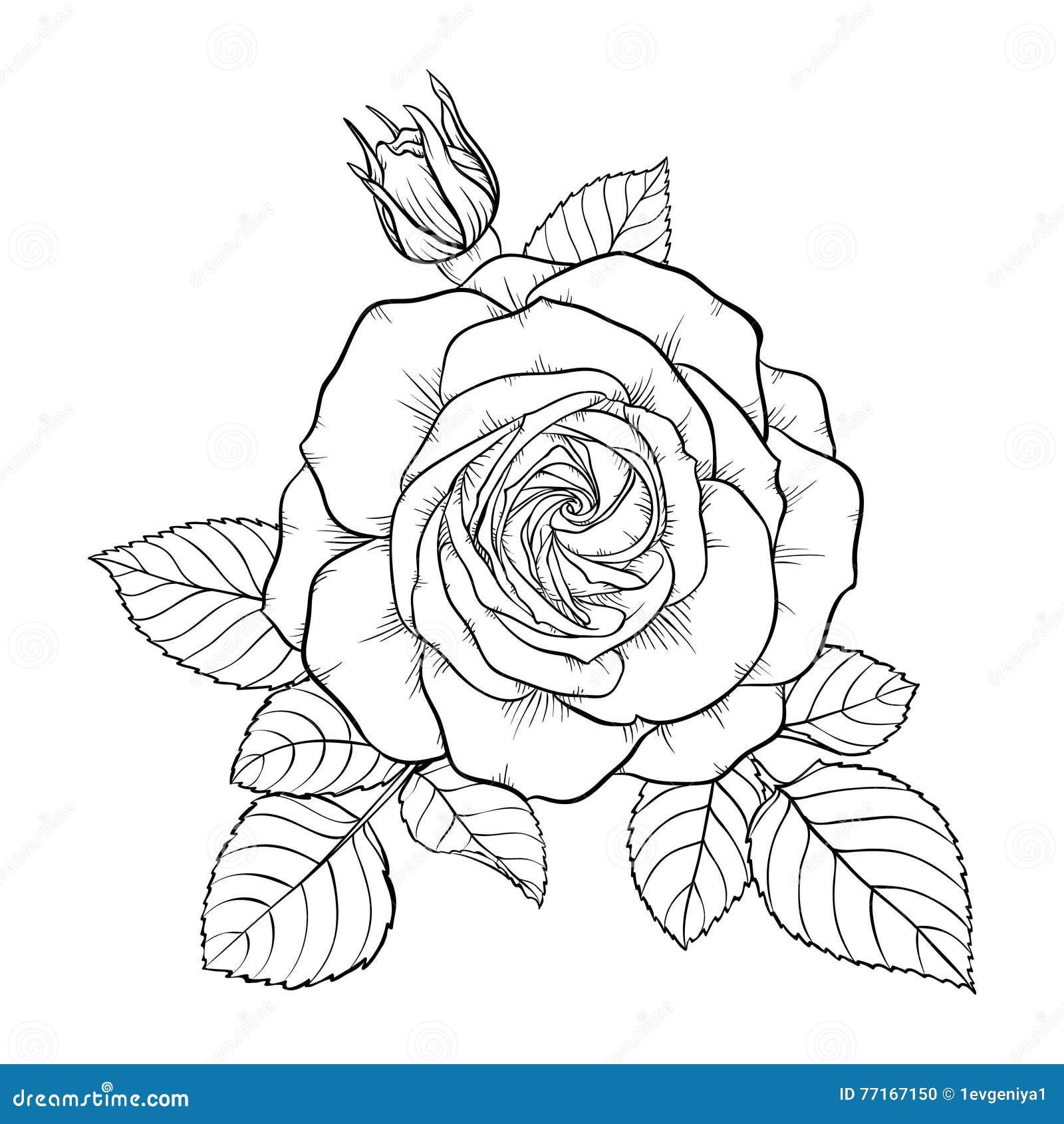 Bella rosa in bianco e nero monocromatica del mazzo for Disegni e prezzi del mazzo