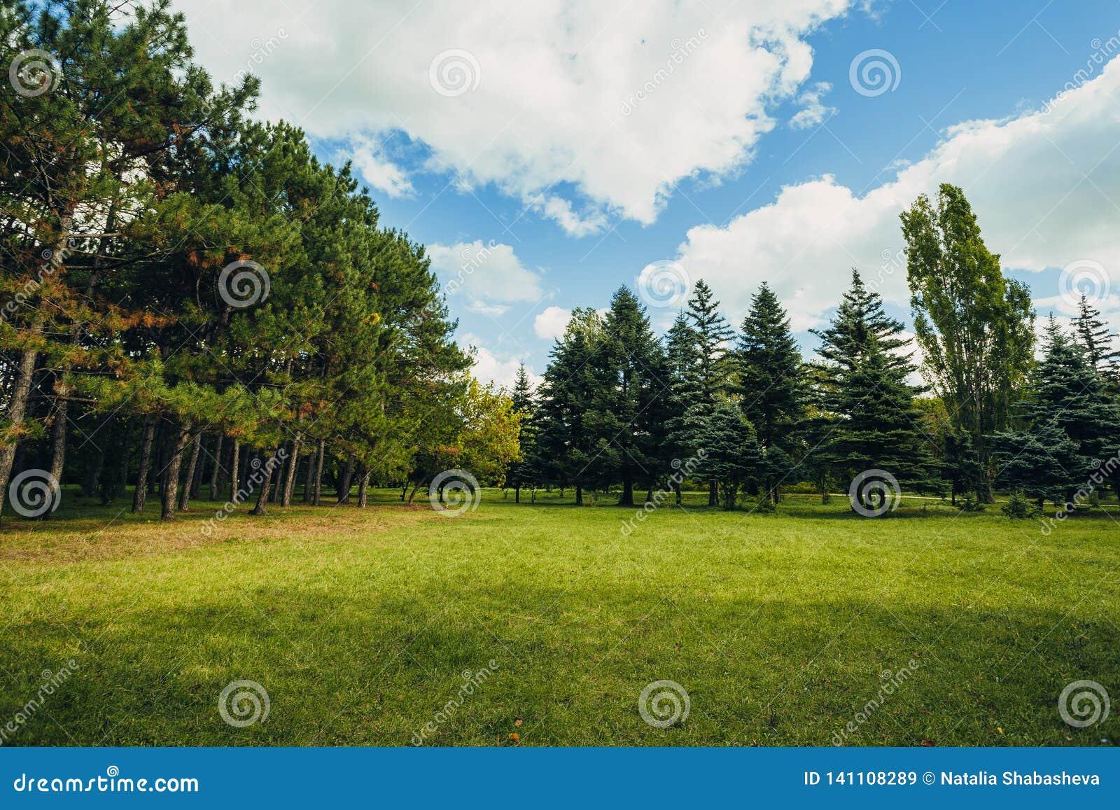 Bella scena del parco in parco pubblico con il campo di erba verde, la pianta verde dell albero e un cielo blu nuvoloso