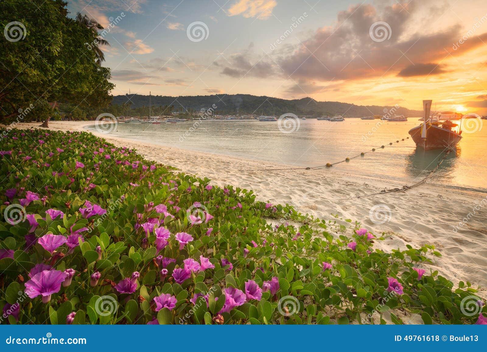 Bella spiaggia con i fiori variopinti e la barca for Fiori con la e