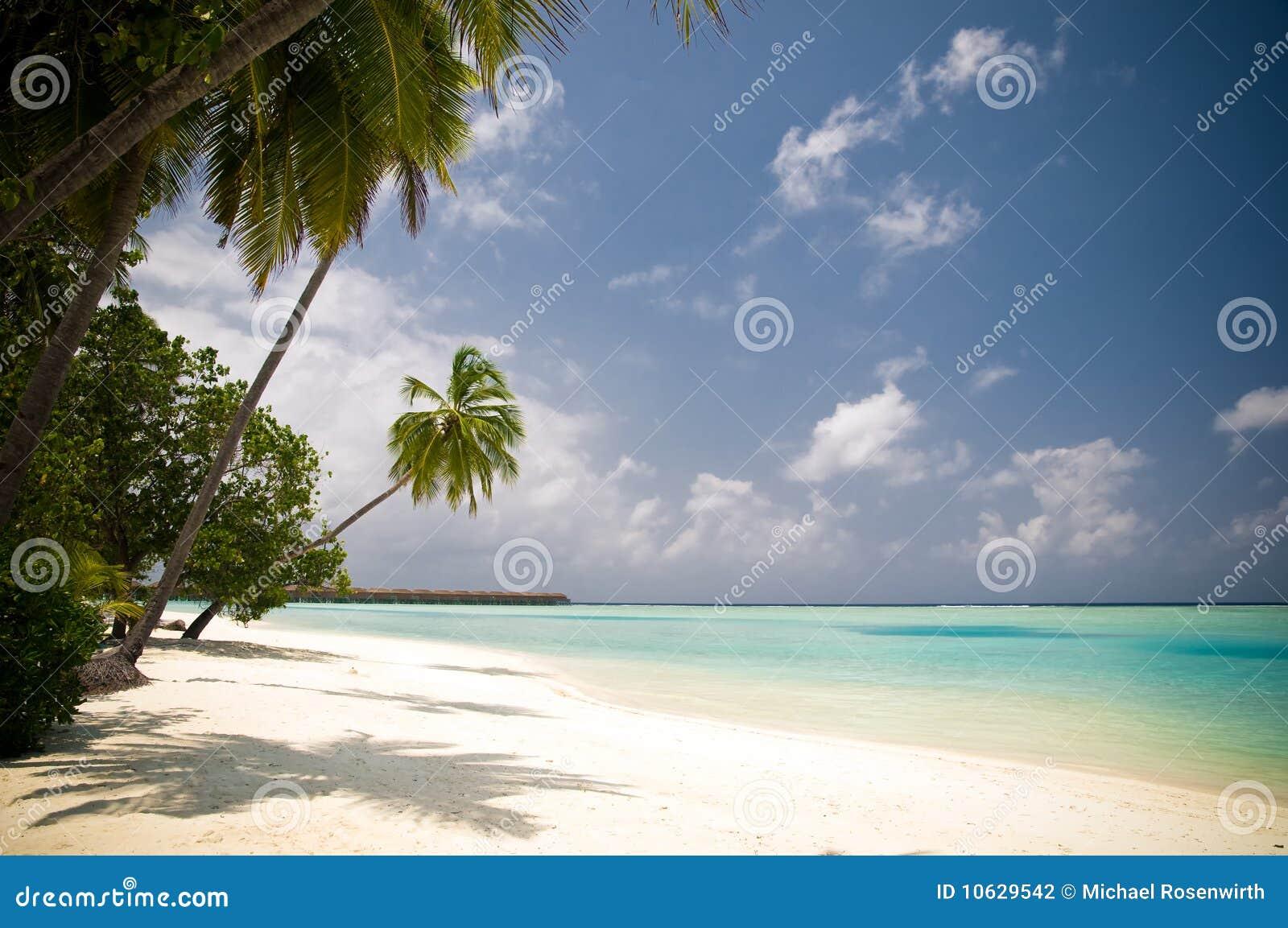 Bella spiaggia tropicale con le palme