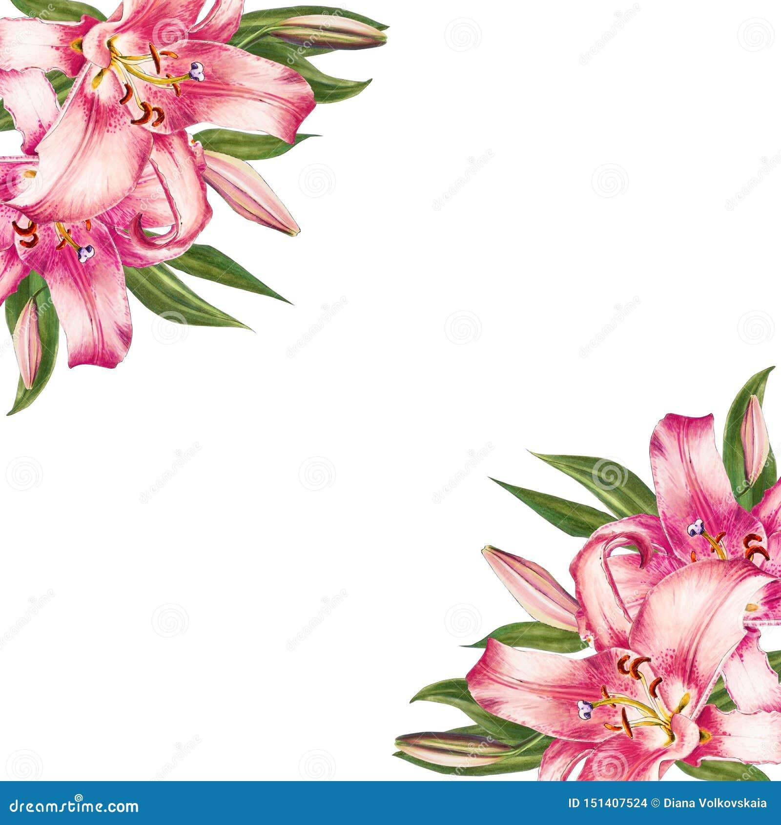 Bella struttura dell angolo del giglio di rosa Mazzo dei fiori Stampa floreale Disegno dell indicatore