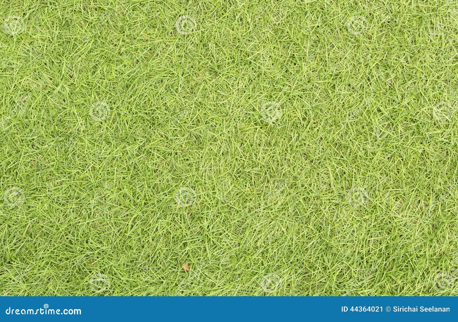 Bella struttura dell erba verde dal campo da golf