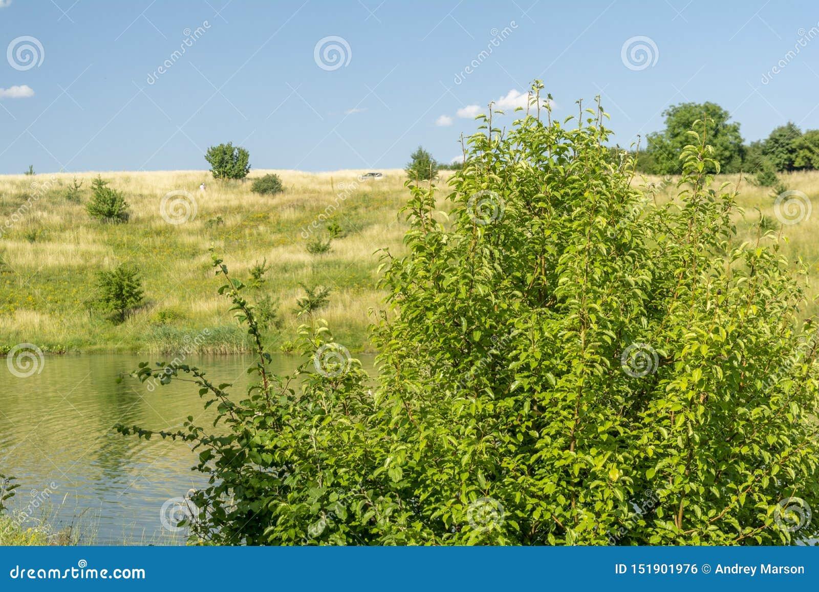 Bella vista del fiume, degli alberi verdi, delle colline e del cielo nuvoloso blu Paesaggio di ESTATE