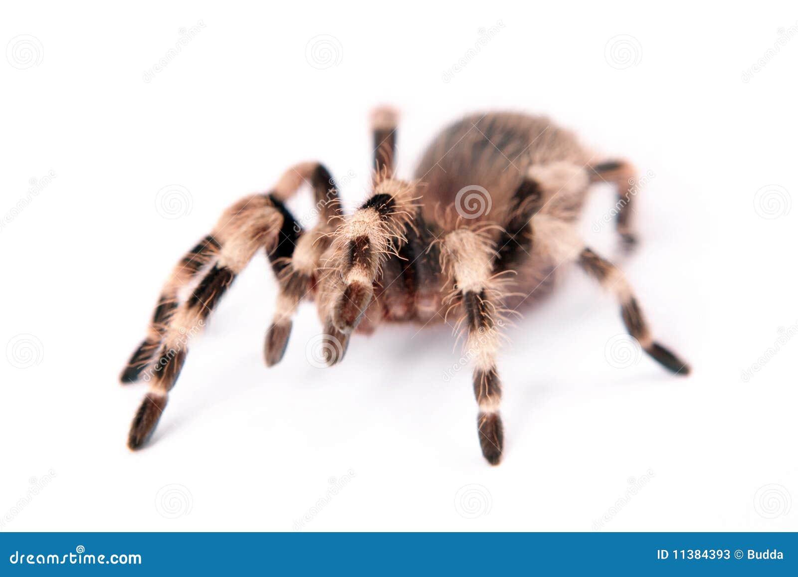 Belle araignée