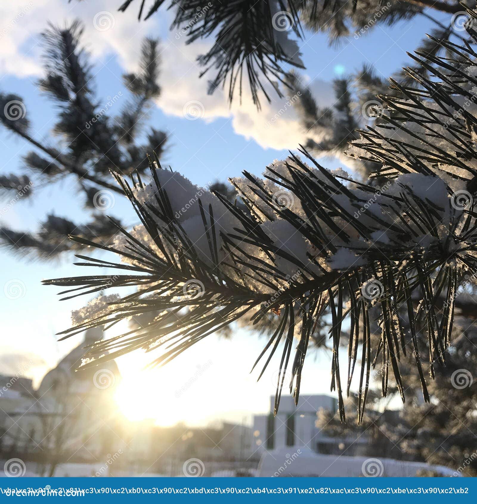 Belle branche même avec le soleil