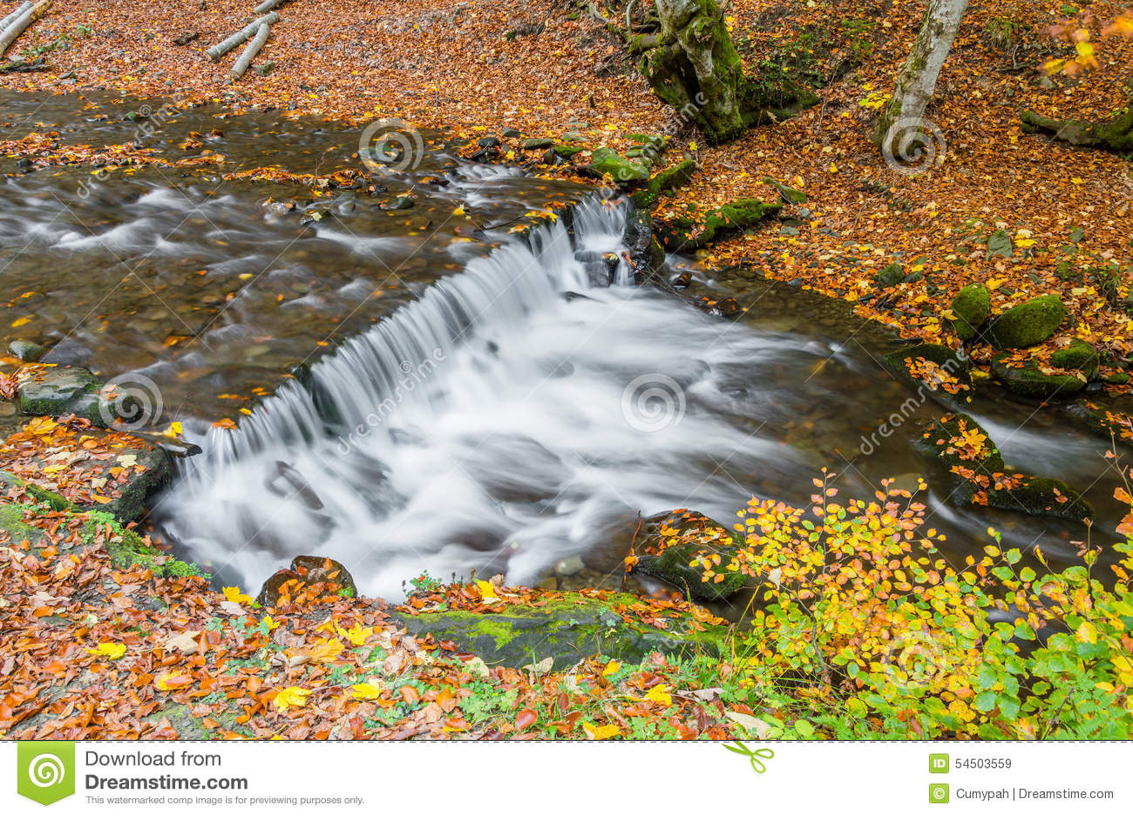 Belle cascade à écriture ligne par ligne d automne