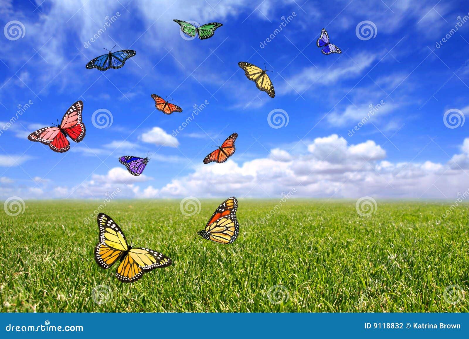 Belle farfalle che volano liberamente in un campo aperto di erba e del ...