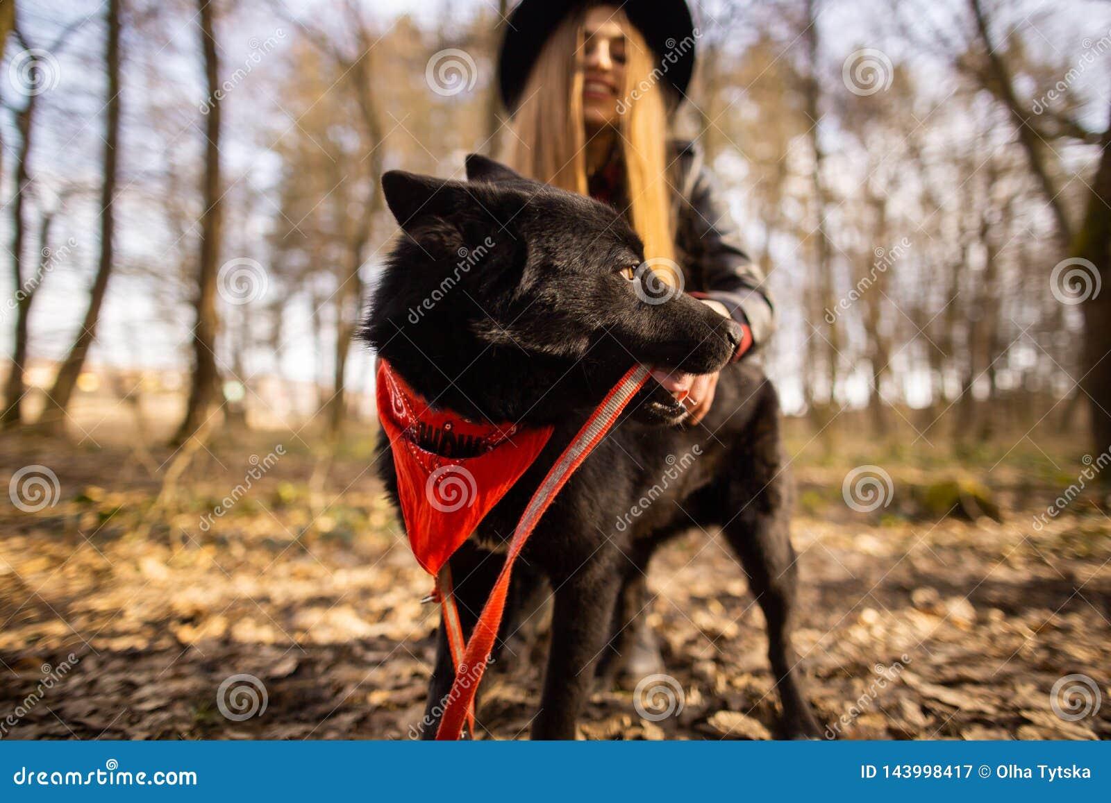 Belle femme frottant son chien dehors Jolie fille jouant et ayant l amusement avec son animal familier de nom Brovko Vivchar