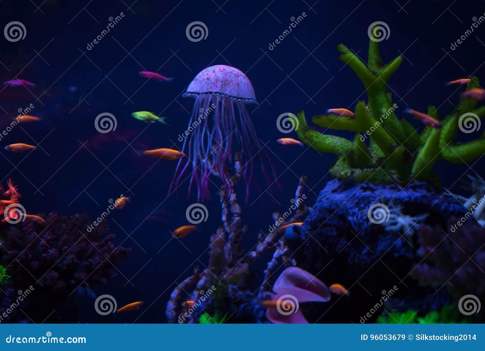 Belle fin de méduses